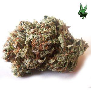 Buy Mail Order Marijuana Canada