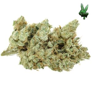 buy marijuana overnight 24 hours next day delivery discreet shipping services